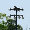 Osprey_nest_trant_baseball_field_012