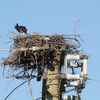 Sunrise_ospreys-3646