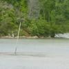 Poplar_creek_926