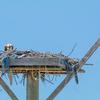 Nests-6155