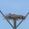 Nests-6204