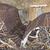 Osprey_-_4-20-20_5
