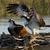 Osprey-avatar