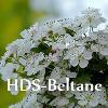 HDS Beltane - Hawthorn