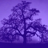 purple Ansel Adams tree