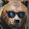 A COOL BEAR WEARIN SHADES