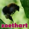 zoethart honeybee