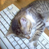 cat sleeping on keyboard.