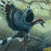 An archaeopteryx.