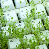 computer keys with green weeds growing under them