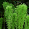 Some Ferns
