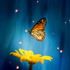 A butterfly over a yellow daisy on a blue background