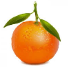 This is a tangerine. Not a basilisk.