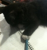 kitten with a pen