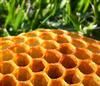 honeycomb on grass