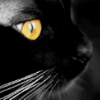 the face of a black cat with yellow eyes