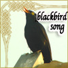 Image of an English blackbird singing on a rock.