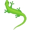 gecko