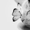 kitty with butterfly
