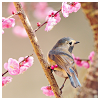 bird & blossoms