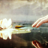 Reach for the lotus with your hand