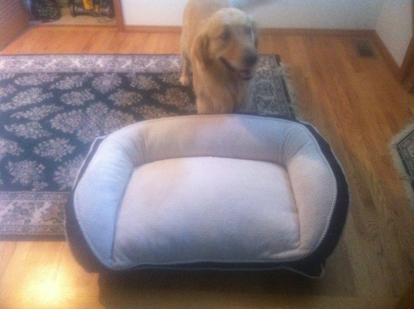 Extremely plush dog bed