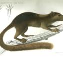 Novara Zoology 1.jpg
