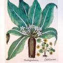 The Garden at Eichstätt: The Book of Plants