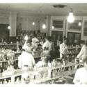 1956 Lab 1.jpg