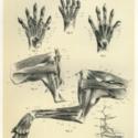 thylacine large foam 800x600.jpg
