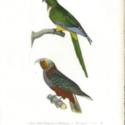 cab 14 Birds-0002.jpg
