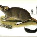 Horn Expd Zoology pl 3.jpg