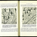 Cab 4 Cajal.jpg