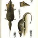 Horn Expd Zoology pl 2.jpg