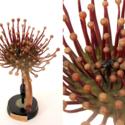 botanical model (4).jpg