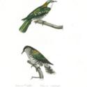 cab 14 Birds-0003.jpg