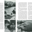 'The Snares Islands' from Pacific Discovery. A Journal of Nature and Man in the Pacific World. Vol. XXIX, no. 5