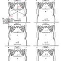Wall Children's muscle chart final.jpg