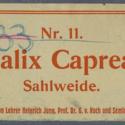 Salix Caprea Nr11 Ad33.jpg