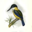 Cab 2 kingfisher erebus.jpg