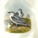 Erebus Terror PL29 BIRD.jpg