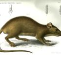 Novara Zoology 2.jpg