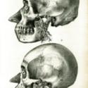 skulls large foam 800x600.jpg