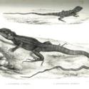 HMS Erebus Lizards.jpg
