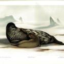 National Antarctic 1902-04 image 3.jpg