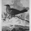 POE BIRD.jpg