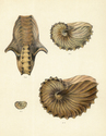 The Zoology of the Voyage of H.M.S. Samarang ... during the years 1843-1846. Vol. 2