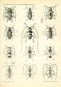 Reise der österreichischen Fregatte Novara.... [Zoology, Vol. IIa]