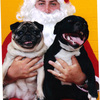 Pebbles_and_diesel_with_santa_thumb