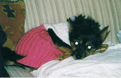 Muffy_in_the_jackie_her_mummy_knitted_large